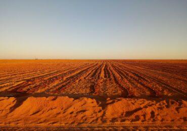 Cultivo en el desierto 2